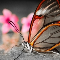5 Tips on Photographing Butterflies ...