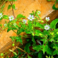 5 Healing Herbs ...