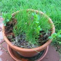 5 Tips on Keeping Plants Warm ...