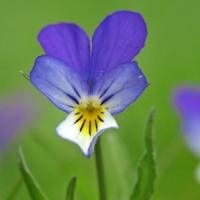 5 Edible Flowers ...