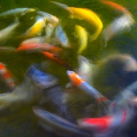 5 Tips on Making a Good KOI Pond ...