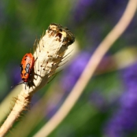 7 Interesting Ways to Keep Your Garden Insect Free ...