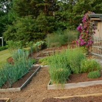 5 Tips on Southern Gardening ...