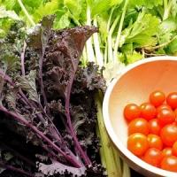 8 Easy Tips for Starting a Vegetable Garden ...