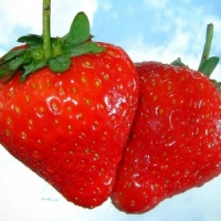 5 Ways to Grow the Best Strawberries ...