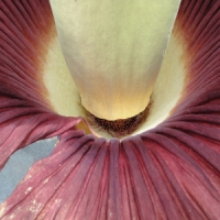 8 Strangest Plants Ever ...