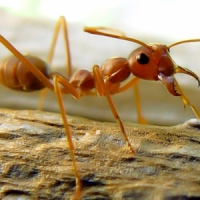 5 Ways to Get Rid of Ants ...