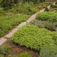 7 Tricks on Gardening ...