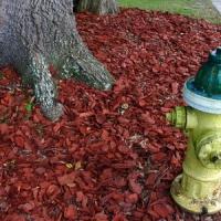 5 April Gardening Tips ...