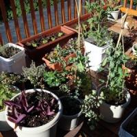 5 Tips on Organic Gardening ...