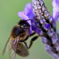 5 Plants That Repel Fleas ...