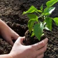 8 Beginner Bloopers in Gardening ...
