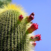 Top 6 Cactus Plants to Have ...