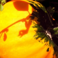 5 Tips on Growing Pumpkins ...