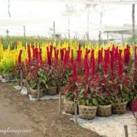 5 Gorgeous Annual Plants …