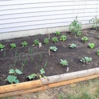 5 Easy Ways to Grow a Vegetable Garden ...