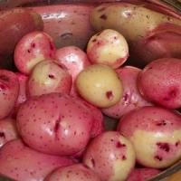 5 Potato Varieties for Planting in a Vegetable Garden ...