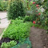 7 Great Gardening Books ...