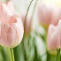 7 Expert Tips for Fresh Flowers ...