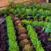 7 Tips for Your First Vegetable Garden ...