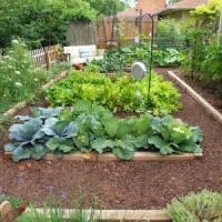 5 Reasons to Grow a Vegetable Garden ...