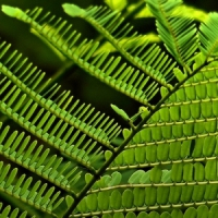 5 Tips on Growing Ferns ...