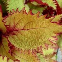 5 Cool Fall Plants ...