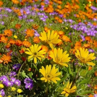 5 Tips on Growing Wild Flowers ...