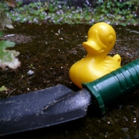 5 Tips on Keeping a Pond up and Running ...