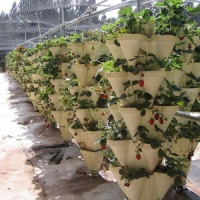5 Reasons You Should Start a Hydroponic Garden ...