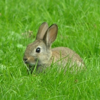 5 Tips on Raising Rabbits ...