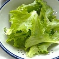 5 Tips on Growing Lettuce ...