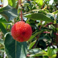 5 Tips on Planting Fruit Trees ...