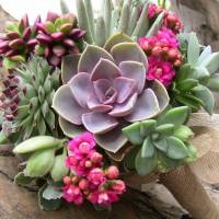 Gorgeous! Grow These Stunning Succulents Now ...