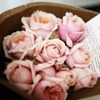 7 Rose Colors and Their Meanings: the Language of Flowers ...