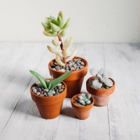 21 Tiny Plants You Can Put Anywhere, No Matter How Small Your Space ...