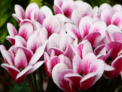 9 Fabulous Plants for a Winter Garden ...