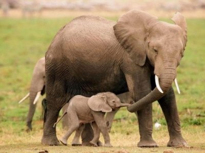 7  Magnificent Facts about Elephants That May Be New to You ...
