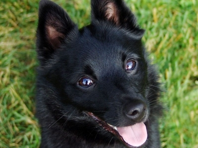 11 Unique Dog Breeds You'll Find Absolutely Adorable ...