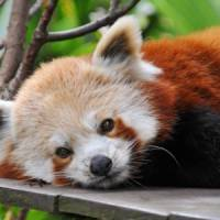 7 Adorable Animals from Asia ...