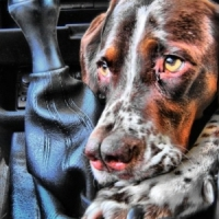 7 Unusual Dog Breeds You May Not Know of ...
