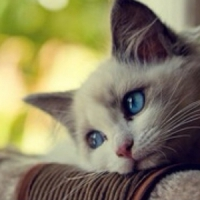 7 Things Worth Knowing about Your Cat That May Surprise You ...