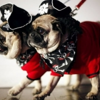 7 Funny and Adorable Halloween Costumes for Dogs ...