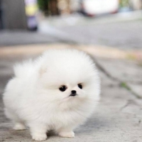 7 Cutest Dog Breeds We All Want to Own ...