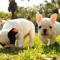 8 Puppy Training Tips ...