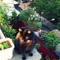 8 Brilliant City Gardening Blogs ...