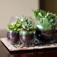12 Terrific DIY Terrarium Ideas ...