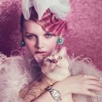 7 Reasons Crazy Cat People Aren't Crazy ...