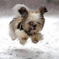 Get Ready to Say Aww: Animals in Snow ...