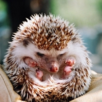 Beyond Cute! Adorable Baby Animals That Will Instantly Make Your Day Better ...